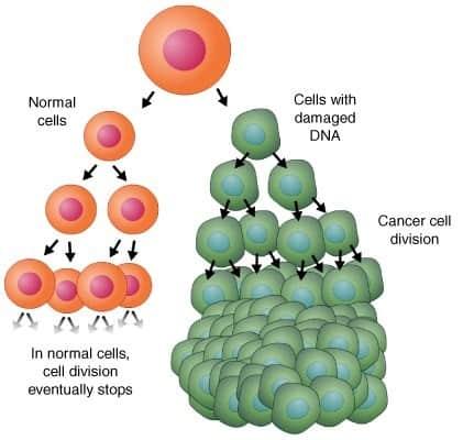 división células cancerosas cáncer